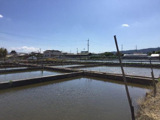 YamatokoriyamaKingyoen_010_org.jpg