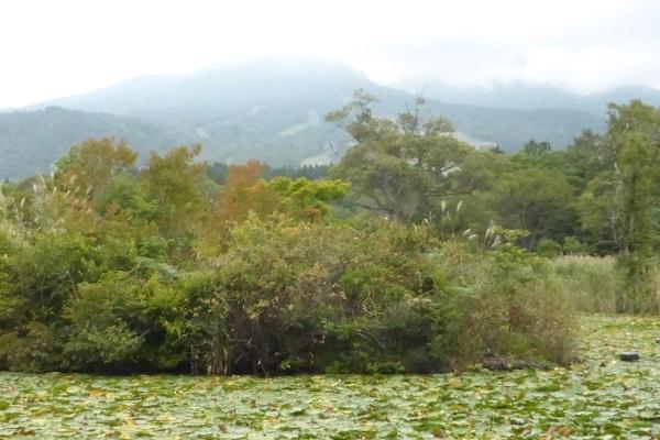 ①昨年のいもり池
