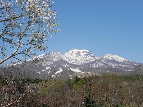 ②雪を頂く妙高山と咲きだした桜
