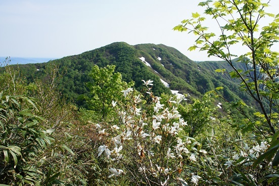 17-6-20飯森山7