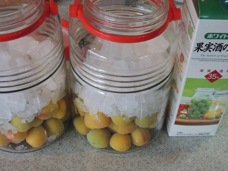 梅の実と氷砂糖とホワイトリカー