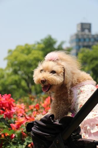 靭公園バラ祭