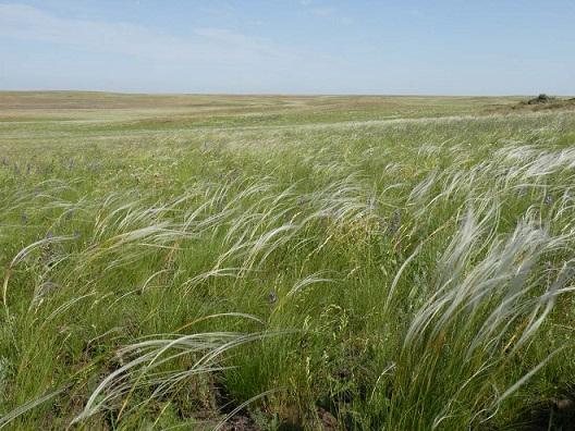 中央ユーラシア草原(ロシア オレンブルク州)
