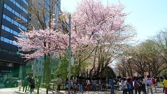 桜よりも人が多い