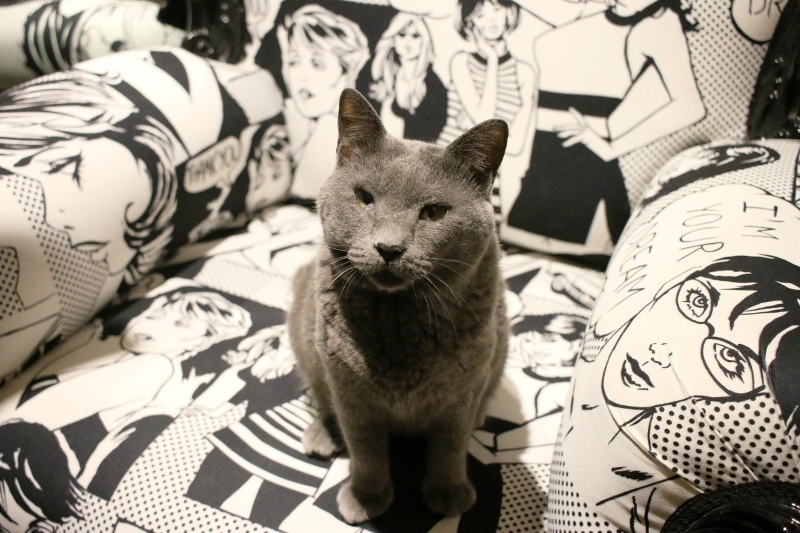 パンタレイ panta rhei 大田区 池上 ギャラリー 猫 店長 ダミアン 装身具 アクセサリー