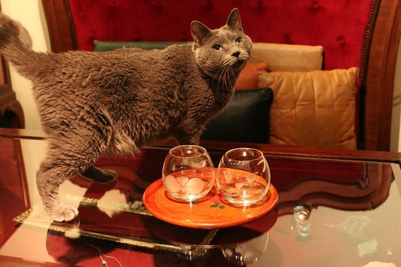 パンタレイ panta rhei 大田区 池上 切子 神谷麻理子 グラス ひげぶくろ 猫 ダミアン