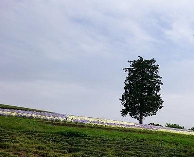 市松模様のお花畑