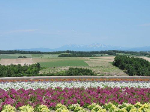 05四季彩の丘大雪山