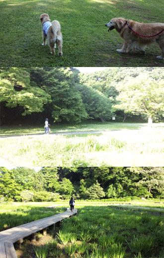 城跡公園の芝