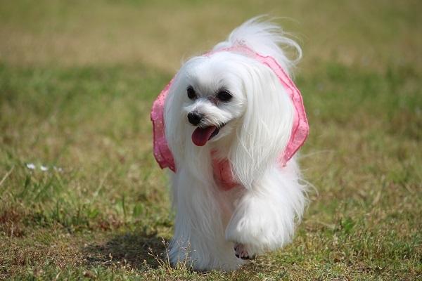 2017.06.05 淡路島旅行1日目① 南あわじドッグラン飛行犬撮影所-11