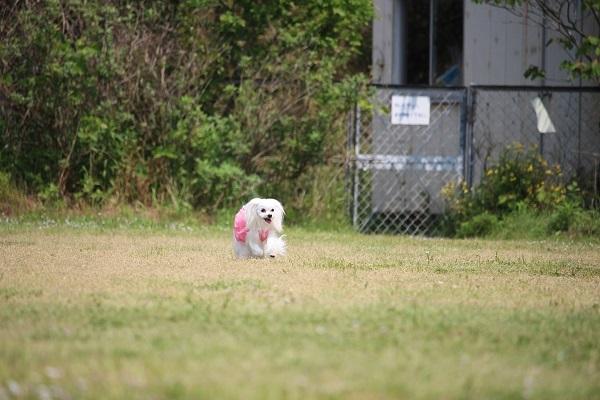 2017.06.05 淡路島旅行1日目① 南あわじドッグラン飛行犬撮影所-12