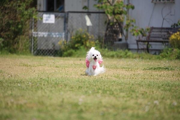 2017.06.05 淡路島旅行1日目① 南あわじドッグラン飛行犬撮影所-13