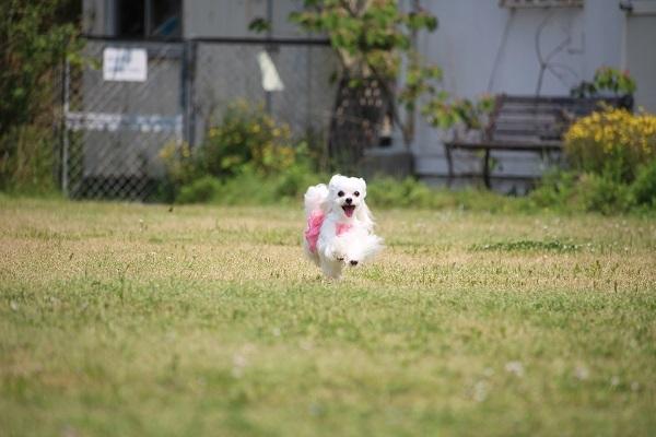 2017.06.05 淡路島旅行1日目① 南あわじドッグラン飛行犬撮影所-14
