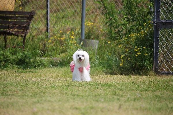 2017.06.05 淡路島旅行1日目① 南あわじドッグラン飛行犬撮影所-18