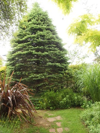my-garden 036