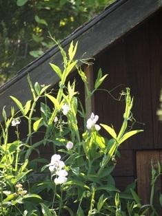 my-garden 018