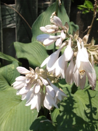 my-garden 055