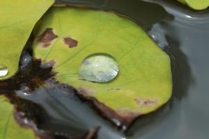 水玉を上手く撮れれば面白い世界が広がると思ったのですが