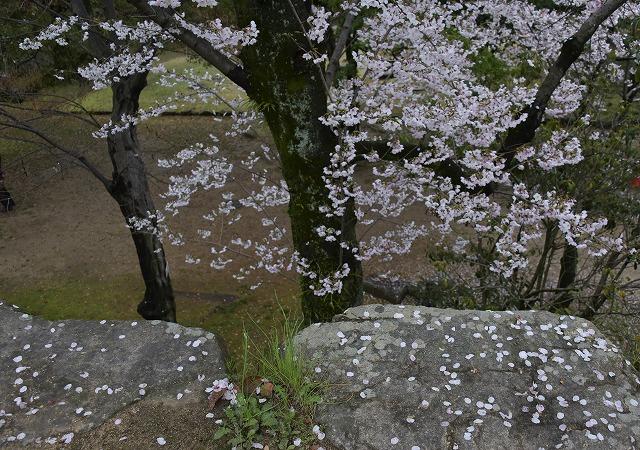 桜めぐり2