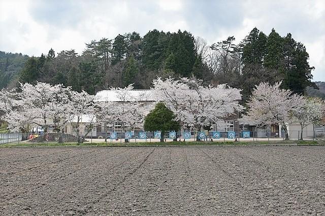 桜めぐり4