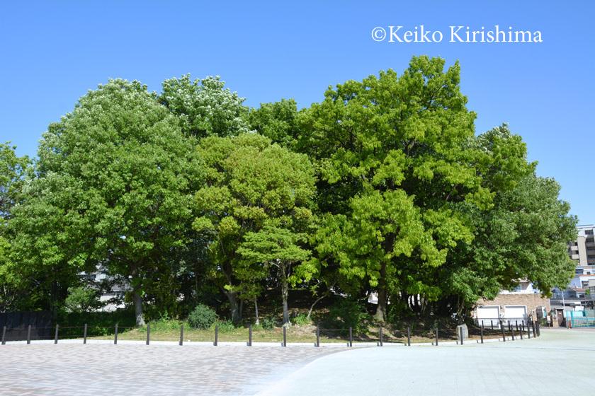 Osamezuka350.jpg