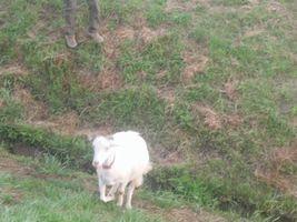 【写真】農園内の土手を駆け上がって来るアラン