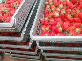 【写真】収穫用トレーに並んだ凍りイチゴ用に収穫したポレポレ苺