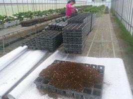 【写真】育苗ハウスで子苗用ポットに土をいれている様子