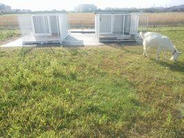 【写真】アラン・フィールドに設置した2つのヤギ小屋の前をアランが歩いているところ