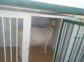 【写真】アランが新しい小屋の右隅をチェックしている様子