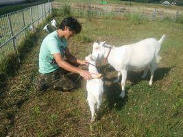 【写真】農園主にブラッシングされているポールに優しく寄り添うアラン