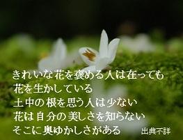 きれいな花を褒める人