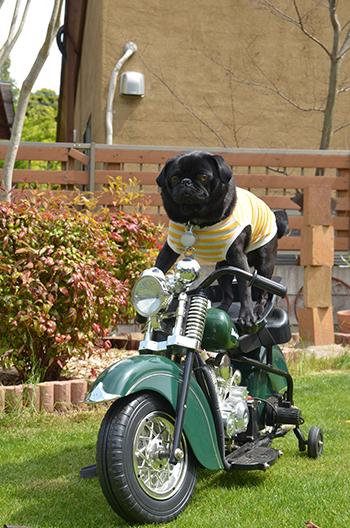 バイク乗り♩