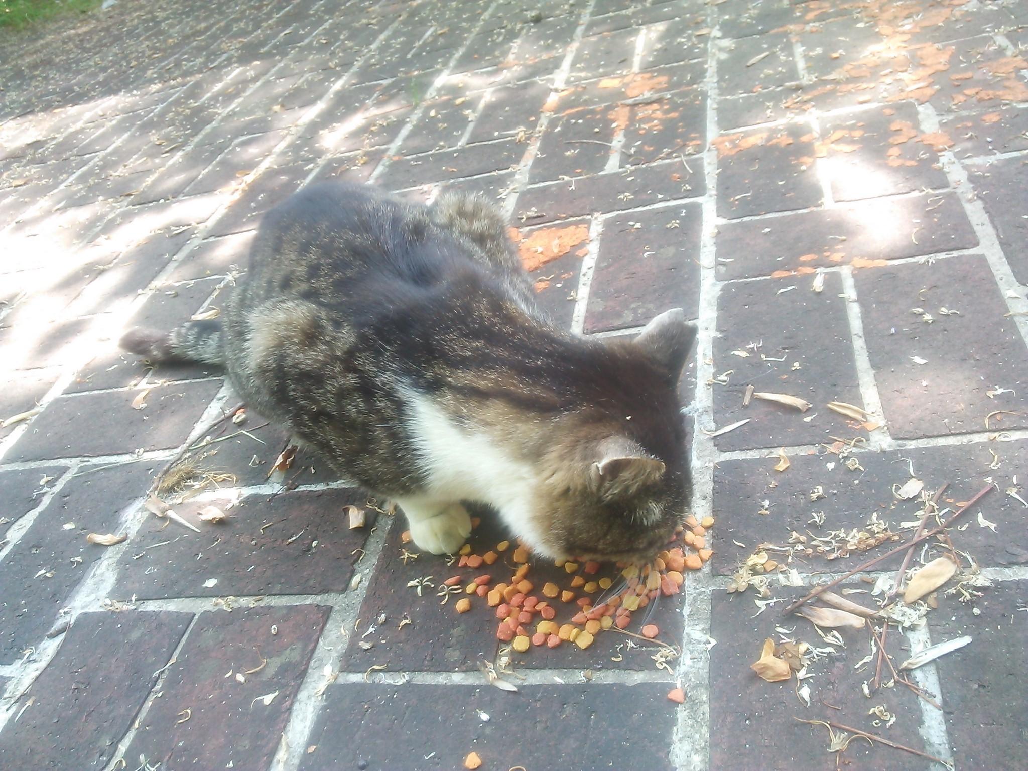 公園でご飯をもらってる猫/アグネス