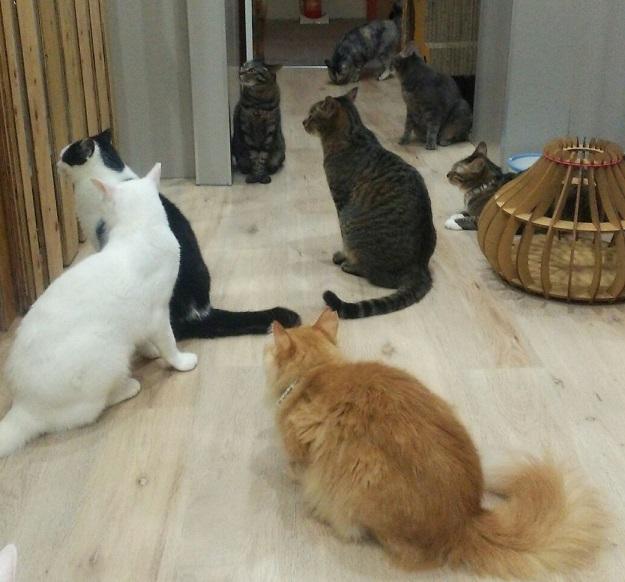 【優しい里親さんを待っている猫ちゃん達】