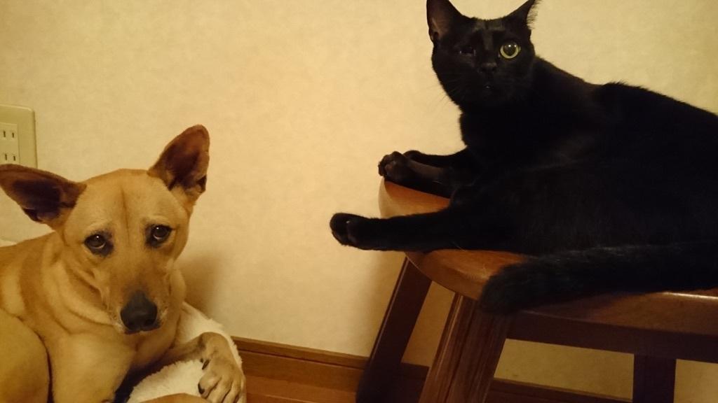 いつも一緒にいる、仲良しの、らん丸&マリリン(=^ェ^=)U^q^U