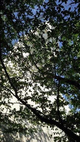 木陰からの観音様