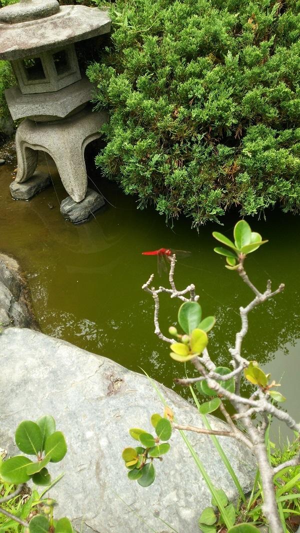 石灯籠と赤トンボ