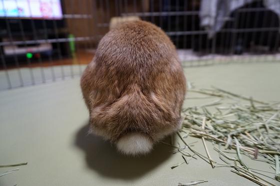 ぴょん子170511_06