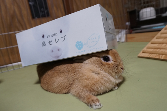 ぴょん子170511_07
