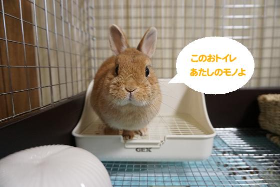 ぴょん子170517_03
