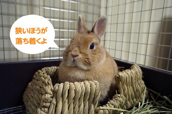ぴょん子170604_02