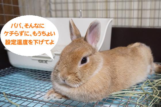 ぴょん子170522_00