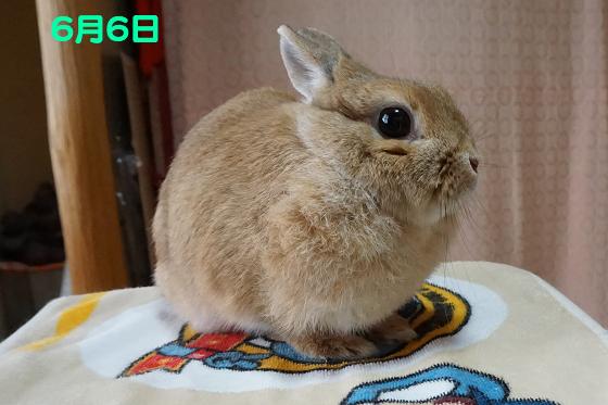ぴょん子170618_00