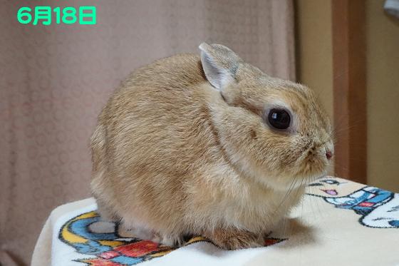 ぴょん子170618_02
