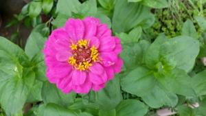 AddCafe花たち (5)
