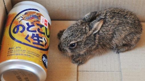 4790野ウサギ175201