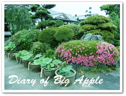 先生のお宅の庭