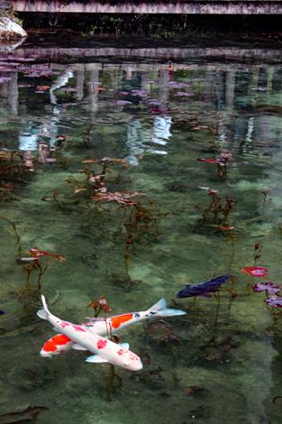 20170503岐阜モネの池2