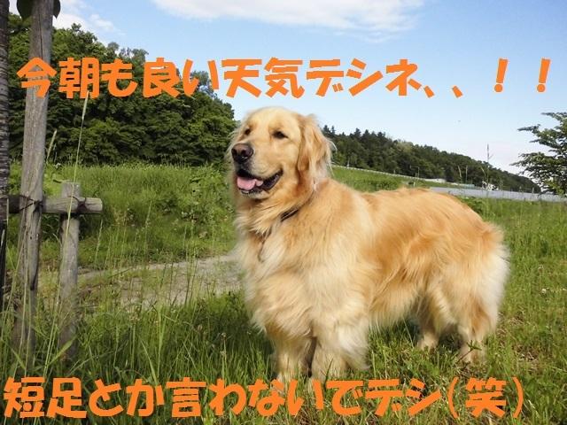 CIMG1187_P.jpg